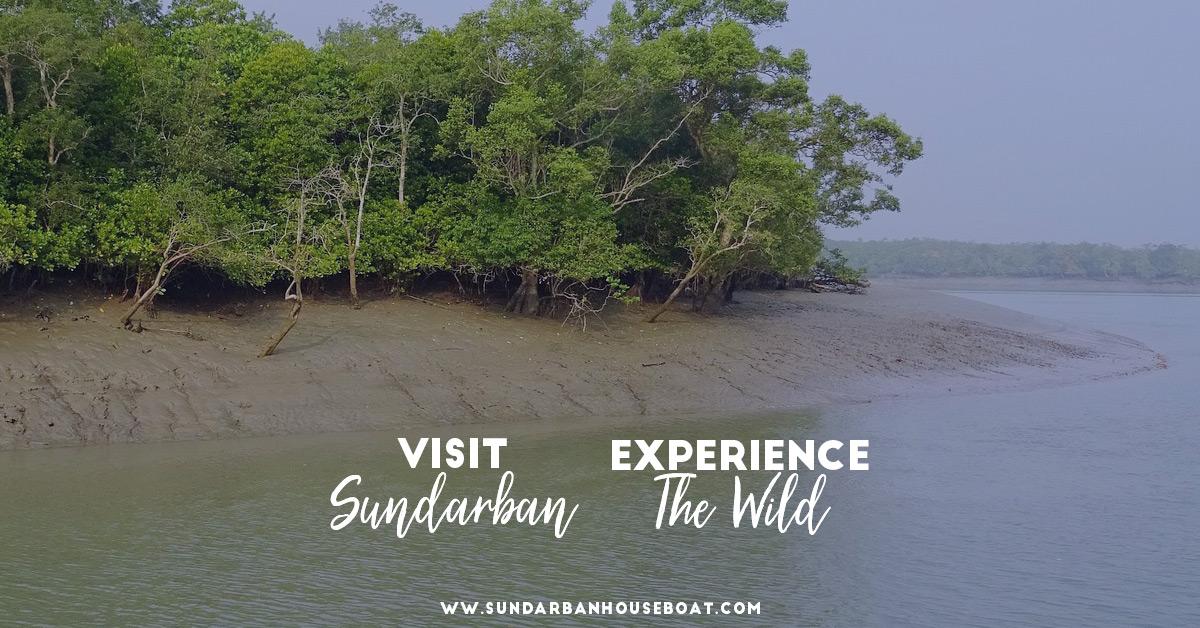 Sundarban Tour Guide