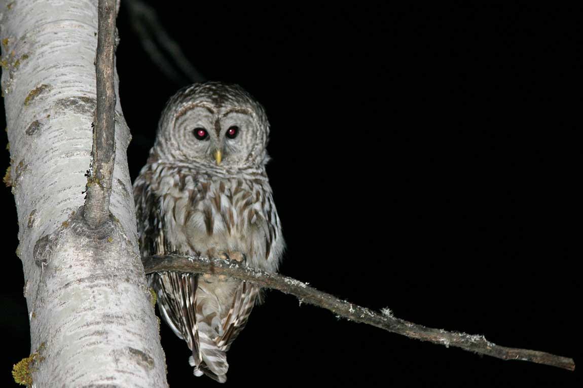 Bird watching in Sundarban